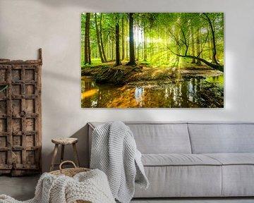 Sonnenaufgang im Wald von Günter Albers