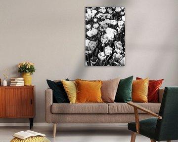 Monochrome Tulpen von Norbert Sülzner