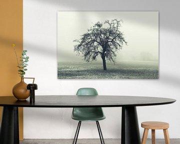 Baum in der Winterlandschaft von Tobias Luxberg