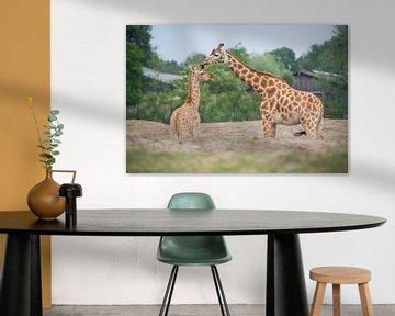 giraf van marijke servaes