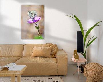 Vlinder op een paarse geranium