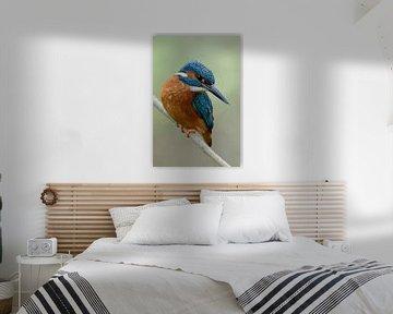 Eurasian Kingfisher * Alcedo atthis * in spring van wunderbare Erde