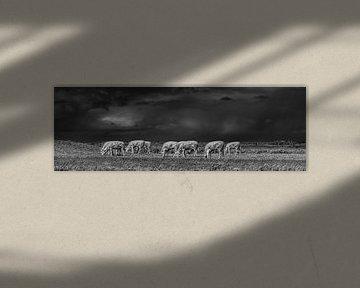 Koeien in het Noorderleeg met een een donkere wolkenlucht van Harrie Muis