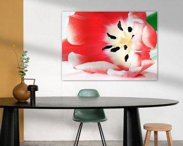 Rode Tulp van MSP Canvas