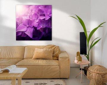 Roze bloemen dromerig von Danny van den Berg