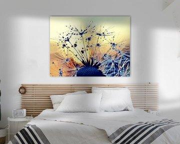 Pusteblume im Sonnenuntergang von Julia Delgado