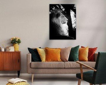 Leeuw op de uitkijk von Jasper Bloemsma