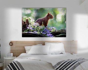 Eekhoorn von Adriaan Westra