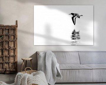 Vliegende scholekster met reflectie (rechthoek)