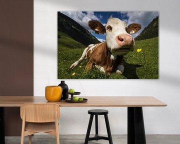Eine Kuh riecht eine Blume von Cynthia Hasenbos