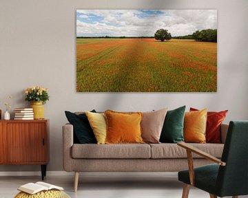 Ein Feld voller Mohnblumen von Cynthia Hasenbos
