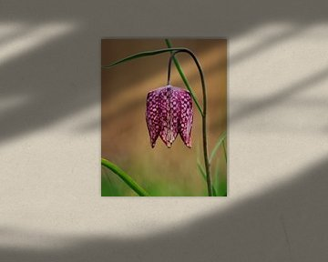 Een roze kievitsbloem von Lindy Hageman