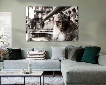 Een boze aap voor een tempel in Cambodja van Robin Evers