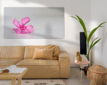 Abstraktes Foto einer Blume von Cynthia Hasenbos