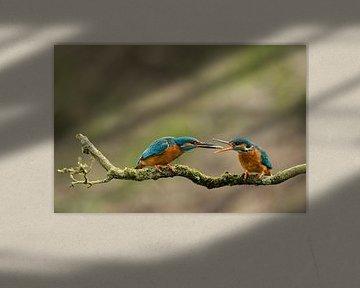 IJsvogel von Freddy Van den Buijs