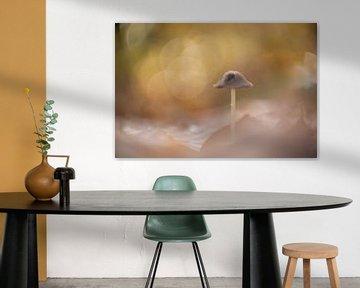 Dromerige paddenstoel