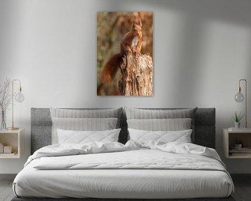 Eichhörnche von Arjan van de Logt