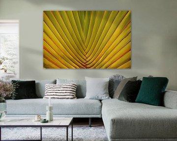 Palmenblatt von Ioana Hraball