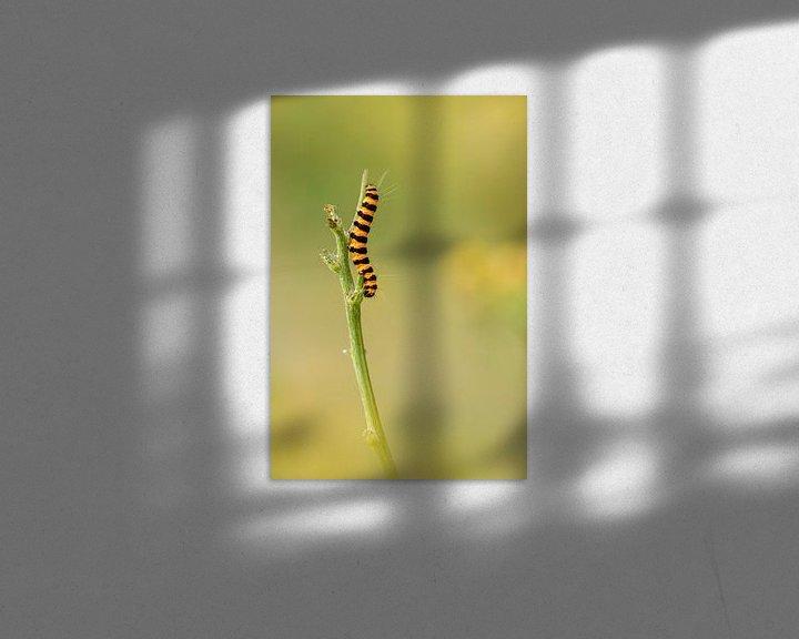 Sfeerimpressie: rups van de sint-jacobsvlinder (Tyria jacobaeae) van Lia Hulsbeek Brinkman