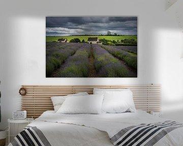 Lavendel boerderij in The Cotswolds Engeland sur Jan van der Vlies