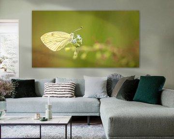 Schmetterling von Yvonne Kruders