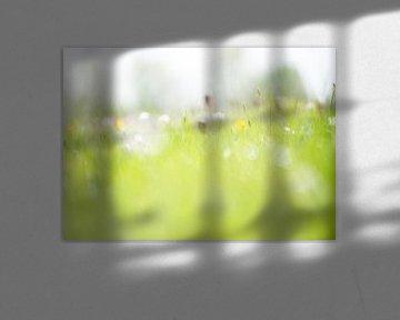 Dromerige opname veldbloemen van Michel Knikker