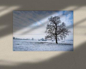 Limburgs winterlandschap met eenzame boom van Gijs Rijsdijk
