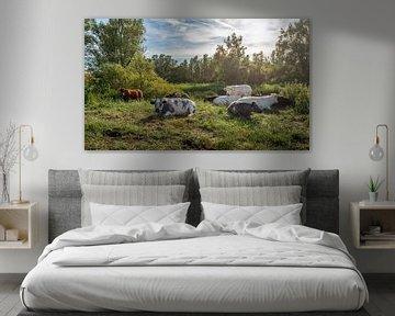 Malerisches Stillleben mit ruhig wiederkäuenden Kühen verschiedener Rassen von Ruud Morijn
