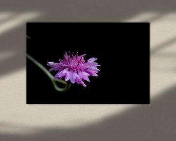 Solo-Blume von Mieke Verkennis