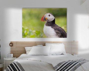 Vogels   Papegaaiduiker ontmoeting in het groen - Farne eilanden van Servan Ott
