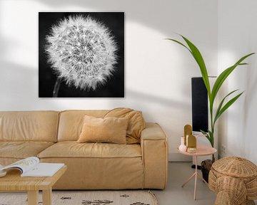 Pusteblume schwarzweiß