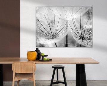 Pusteblumen Schirmchen schwarzweiß von Julia Delgado
