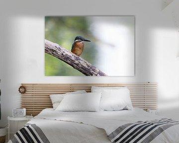 IJsvogel van Edwin Nagel