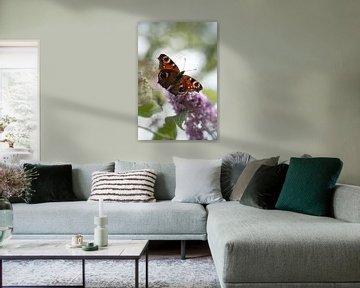 Dromerig plaatje van een vlinder von Milou Oomens