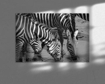 Zebra's in Tarangire NP von Karin Mooren