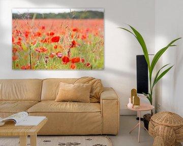 Blumen und Pflanzen | Mohnfeld in England von Servan Ott