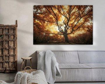 Grand arbre d'automne sur Rob Visser