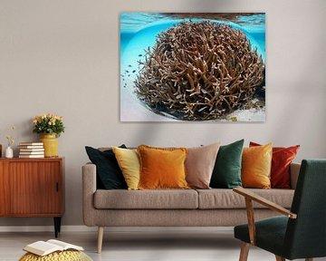Vissen in een bol gevangen von Silvia Weenink