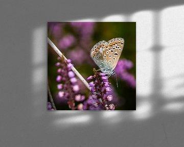 Vlinder van Hans Lunenburg