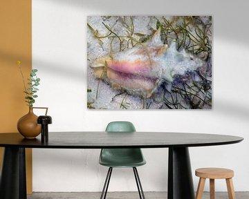 Schelp met visje van Silvia Weenink