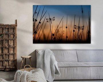 Bandheidelibellen in het blauwe uurtje van Erik Veldkamp