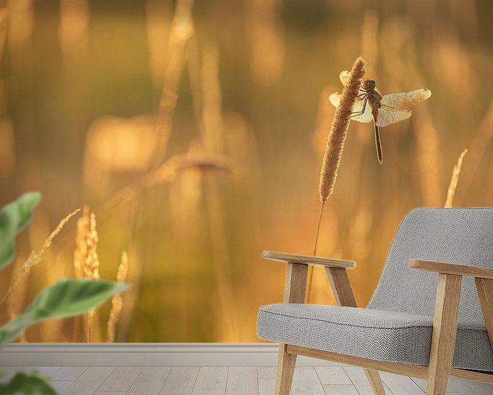 Sfeerimpressie behang: Een Heidelibel aan het opwarmen van Erik Veldkamp