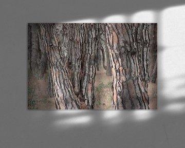 Tussen de boomstammen van whmpictures .com