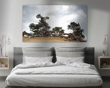 Bomen op een zandheuvel van Incanto Images