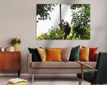 Fauler Panda von Zoe Vondenhoff
