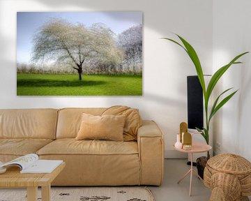 18 pictures of an apple tree  van Patrick LR Verbeeck