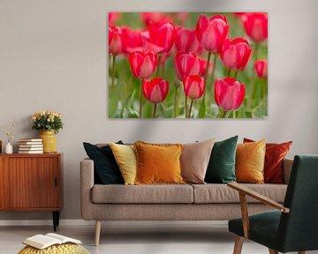 Tulpen in voller Blüte von Edwin Nagel