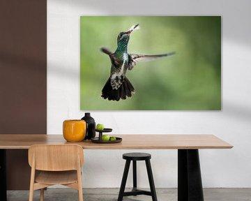 Vliegende Kolibrie met een mooie achtergrond sur Peter R