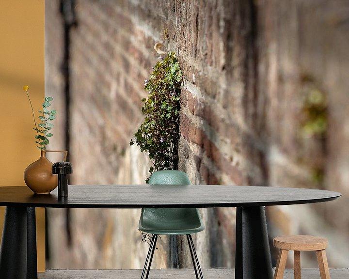 Sfeerimpressie behang: Bloeiende muurbloemen op oude stadsmuur van Fotografiecor .nl