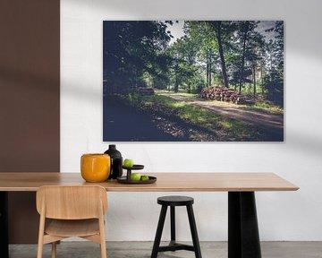 Boomstammen langs wandelpad in bos op de Veluwe van Fotografiecor .nl